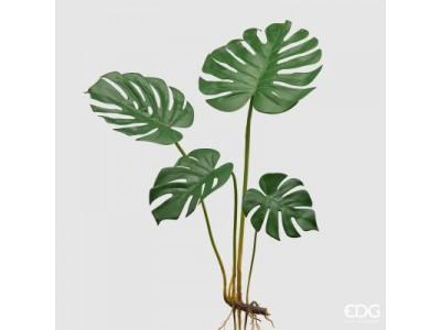 Monstera H80 cm Φυτά