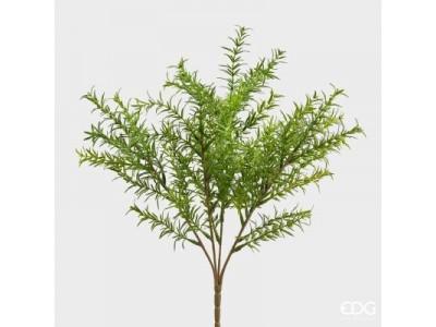 Δενδρολίβανο Φυτά