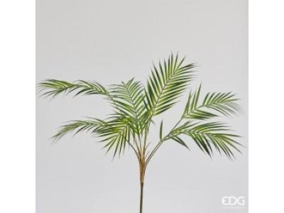Palma Areca H80 cm Φυτά