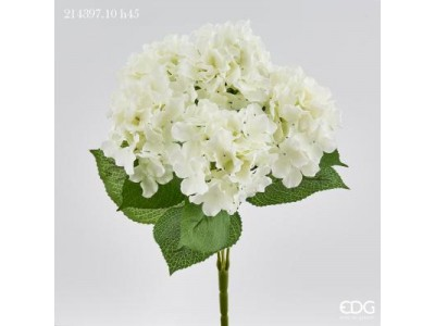 Ορτανσία Λευκή Μεγάλη Φυτά