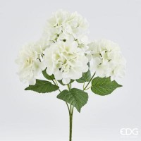 Ορτανσία Λευκή Μικρή Φυτά